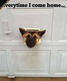 Everytime I Come Home ... | Click the link to view full image and description : )