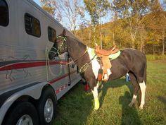 Paint barrel/trail mare - $2500 (Strunk, Ky)