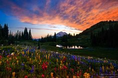 Photo Flowers and Fire at Mount Rainier by Nitin Kansal on 500px