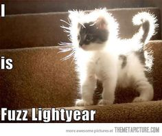 Fuzz Lightyear To The Rescue!