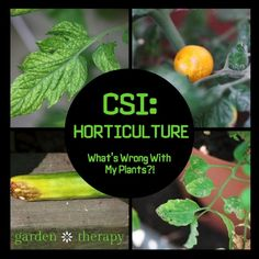 CSI Horticulture: Organic Control of Plant Disease - Garden Therapy