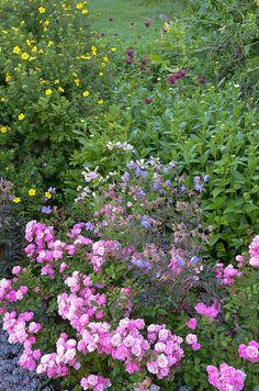 I <3 a perennial garden!