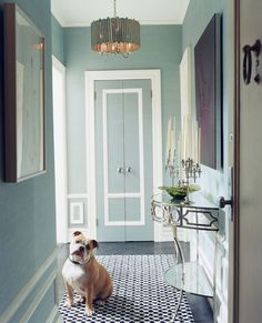 chic modern halway entry blue green white wainscotting interior design, wall colors, bulldog, the doors, closet doors, blue, paint colors, hallway, entryway