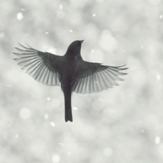 Birds Flying in Snow photo series by Mingta Li. Elegance and innocence.