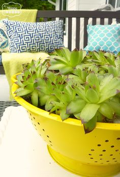 Upcycle an old colander into a planter for succulents like these Hens and Chicks... tutorial at thehappyhousie