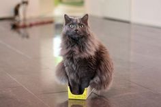 There is no box too small for a cat to sit in!