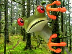 Happy Birthday to You - Tango the Tree Frog