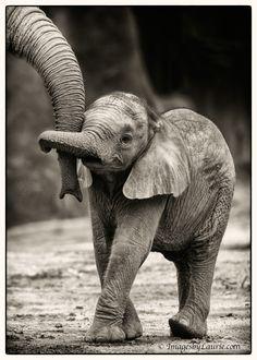 baby elephant hug