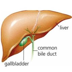 Best Vitamins And Foods For The Liver