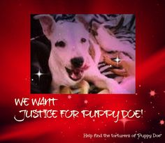 https://www.facebook.com/JusticeForPuppyDoe/photos_stream