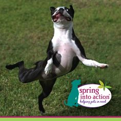 Spring Into Action! Enter your pet rescue hero for a chance to win $1,000 cash for a shelter of their choice, plus $4,000 worth of our healthy food. Show your support for pet rescue today! http://on.fb.me/1f8azFk