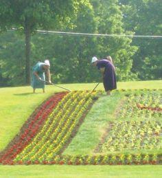 Amish Women Gardening