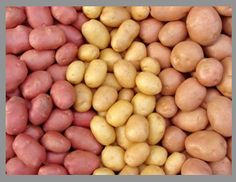 ... which type of potato is best for potato salad or boiling?potato salads