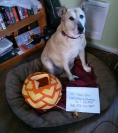 Dog Shame | My Mom was carving a pumpkin so I helped and ate...
