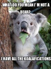...bearly.