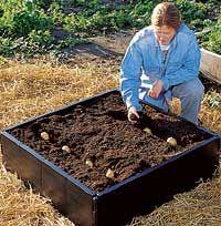 potato bed, raised bed gardens, grow bed, seed potato, plant potato, rais bed, small space