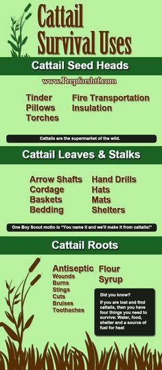Cattail Survival Uses | Infographic #SurvivalLife www.survivallife.com