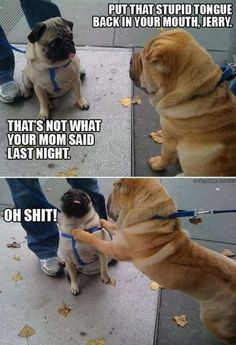 """THAT'S NOT WHAT YOUR MOM SAID LAST NIGHT.""    Pugs are sometimes douchebags."