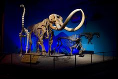 Dinosaurs at the Milwaukee Public Museum  #WhyHB
