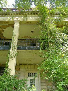 Abandoned plantation