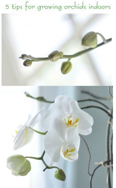Growing orchids indoors  I def need this, mine are sticks.