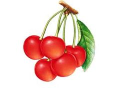cherry - Google Search