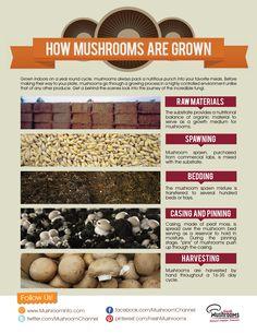 The Mushroom Growing Process