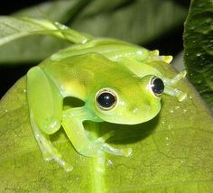 Cute little green frog