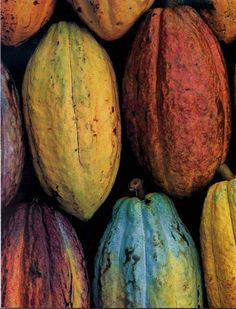 Cocoa Pods   I want to go where chocolate grows! ;) Daddy remembers eating these as a child in the Philippines -J
