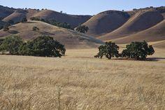 Contra Costa Hills #1, via Flickr.