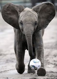 soccer time...who says elephants aren't the strongest?