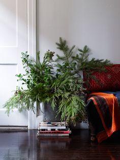 // evergreen