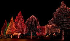 Christmas Lights at Swan Lake