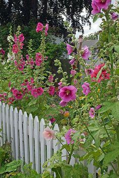 <3 White Picket Fence <3
