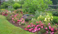 Flower Carpet Pink Supreme and Flower Carpet Scarlet add summer long color to the front of these garden beds