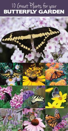 10 Great Plants for a Butterfly Garden would be great to put into a school or community garden