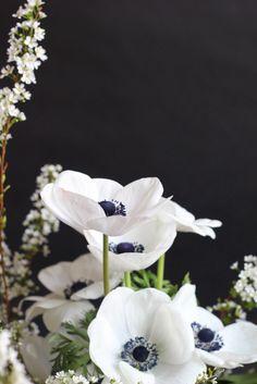 gorgeous bloom, black n white, white flowers, blue flowers, party crafts, black white, garden, flower photography, white anemon