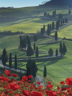Winding Road and Poppies, Montichiello, Tuscany, Italy