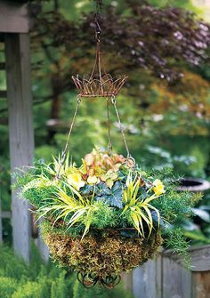 garden container, hang basket, container plants, shade hang, hanging baskets, container gardening
