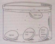 Egg Float Test - freshness