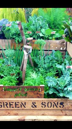 Veggie patch ideas on pinterest gardening house for Vegetable patch ideas
