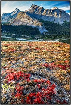 Jasper National Park, Alberta, Canada <3