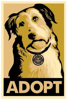 adopt ~