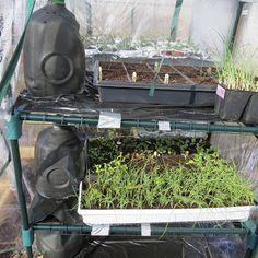 Setting Up Shelf Greenhouses Outdoors: Tips & Tricks....