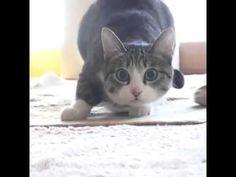 Cat Wiggle Wiggle Wiggle