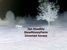 8x10 'inverted' horses in pasture. $20 or 4 5x7 assorted inverted. If you like something different this is it!