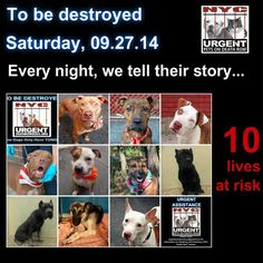 To rescue a Death Row Dog, Please read this:<br /><br />http://urgentpetsondeathrow.org/must-read/<br /><br /> <br /><br />To view the full album, please click here:<br /><br /> <br /><br />https://www.facebook.com/media/set/?set=a.611290788883804.1073741851.152876678058553&type=3