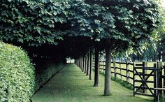 trees, clipped hedges and post and rail fence