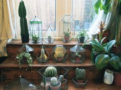 interior plants, glasses, cacti, dream, green, plant pots, gardens, glass containers, glass houses