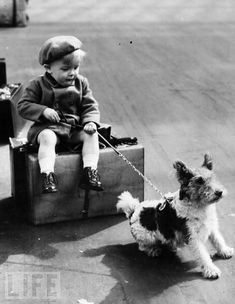 Awaiting evacuation, a young refugee hangs onto his dog's leash in 1940. Vast numbers of pets were, not surprisingly, separated from their families during the war, while breeding progams and animal shelters were often shuttered or cast into disarray.